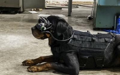 美陆军研制军犬用增强现实护目镜(英文)